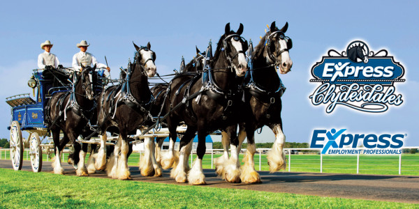 Express Clydesdales Image